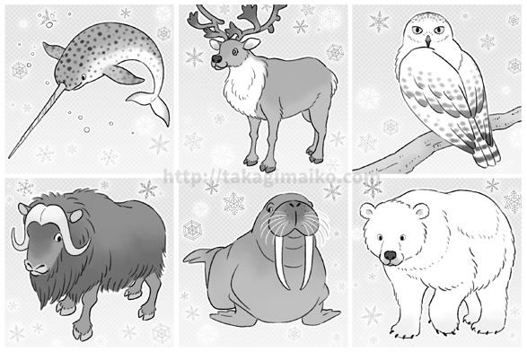 野生動物のイラスト(イッカク、トナカイ、シロフクロウ、ジャコウウシ、セイウチ、ホッキョクグマ)
