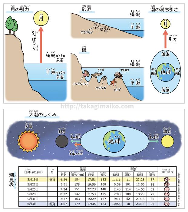 理科の解説イラスト、潮の満ち引き・大潮のイラスト(朝日小学生新聞 2019年5月18日付け)